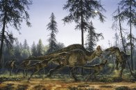 Albertosaurus attacking