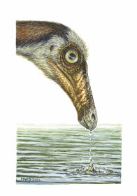 Ornithomimid filter-feeding