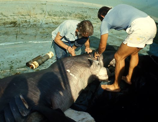 Examining the first Megamouth Shark