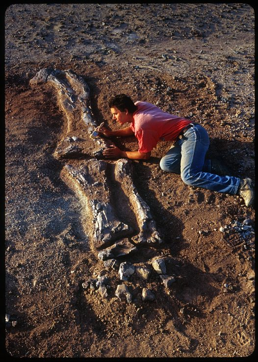 Jobaria fossil specimen being excavated