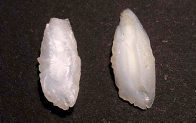 Longfin Pike otoliths
