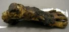 Ancient Egyptian mummified human foot