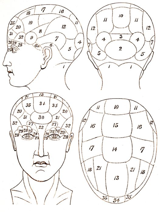 Locations of phrenology's 35 faculties