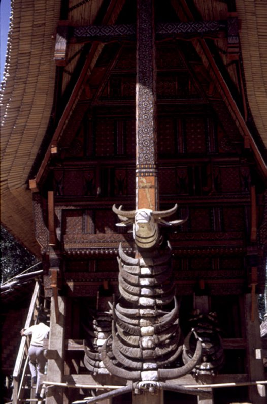 Tongkonan decorated with buffalo horns