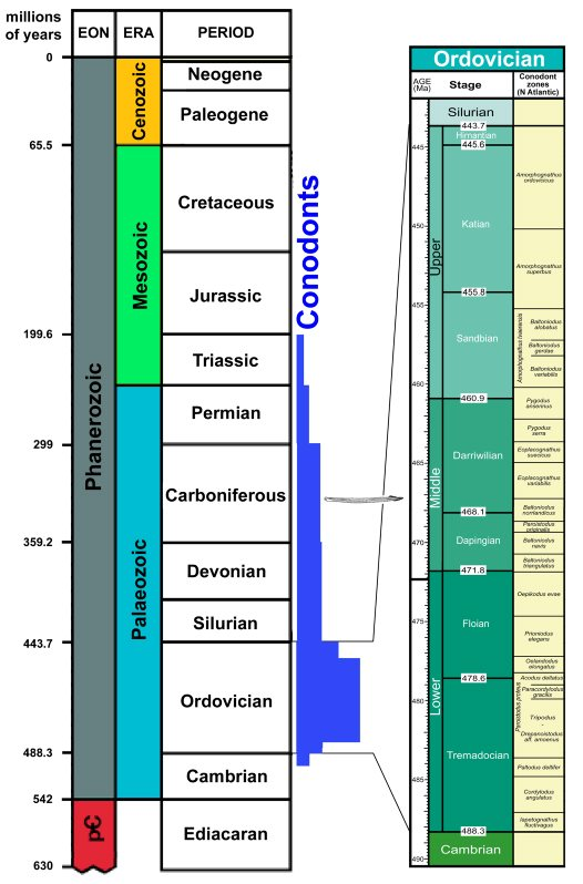 Stratigraphic range and diversity of conodonts