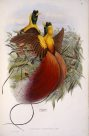 Red Bird of Paradise painting