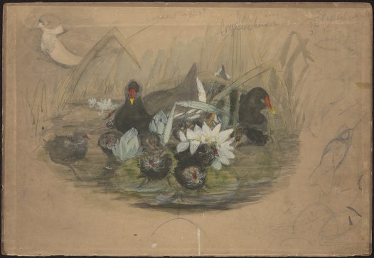 Preparatory sketch of moorhen and chicks