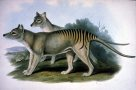 Extinct Australian Animals by John Gould