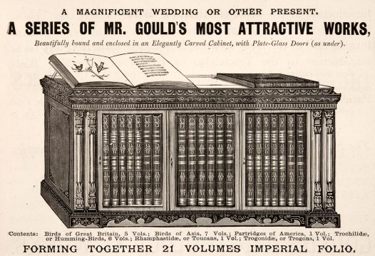 Gould Custom-Made Cabinet