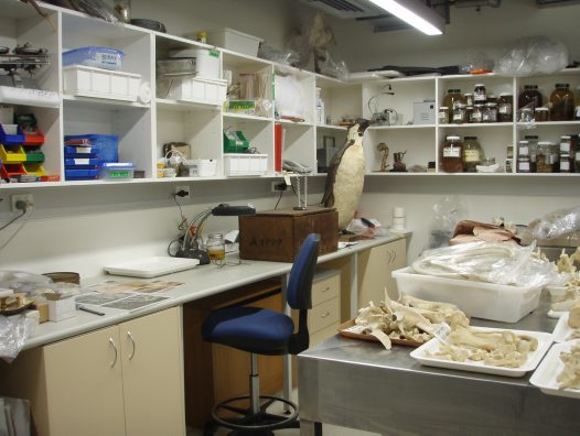 Taxidermy repair and maintenance laboratory