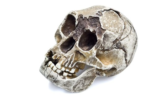 Angle view of Homo floresiensis skull