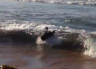 Black Swan Bodysurfing