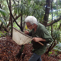 The 'other' Lord Howe Insect by Dr Chris Reid