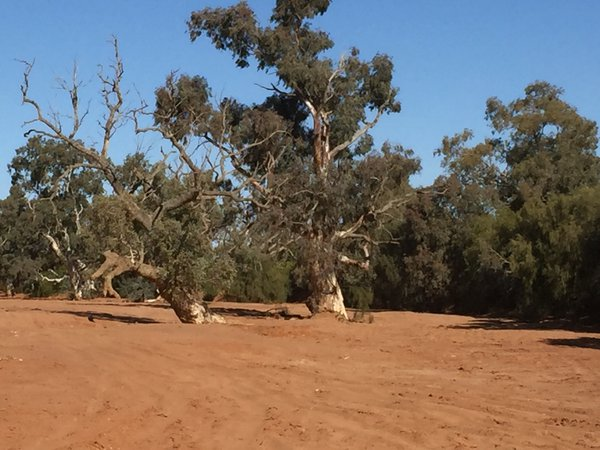 Dry creek bed, Silverton NSW, Australia.