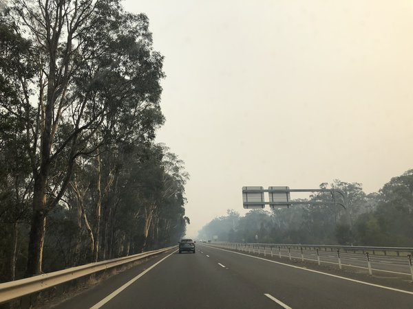 2 January 2020 - 9am, the road out of Jervis Bay, driving through smoke past burnt trees.