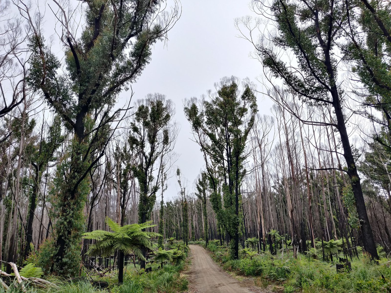 Example of burnt trees and regrowth, during fieldwork.
