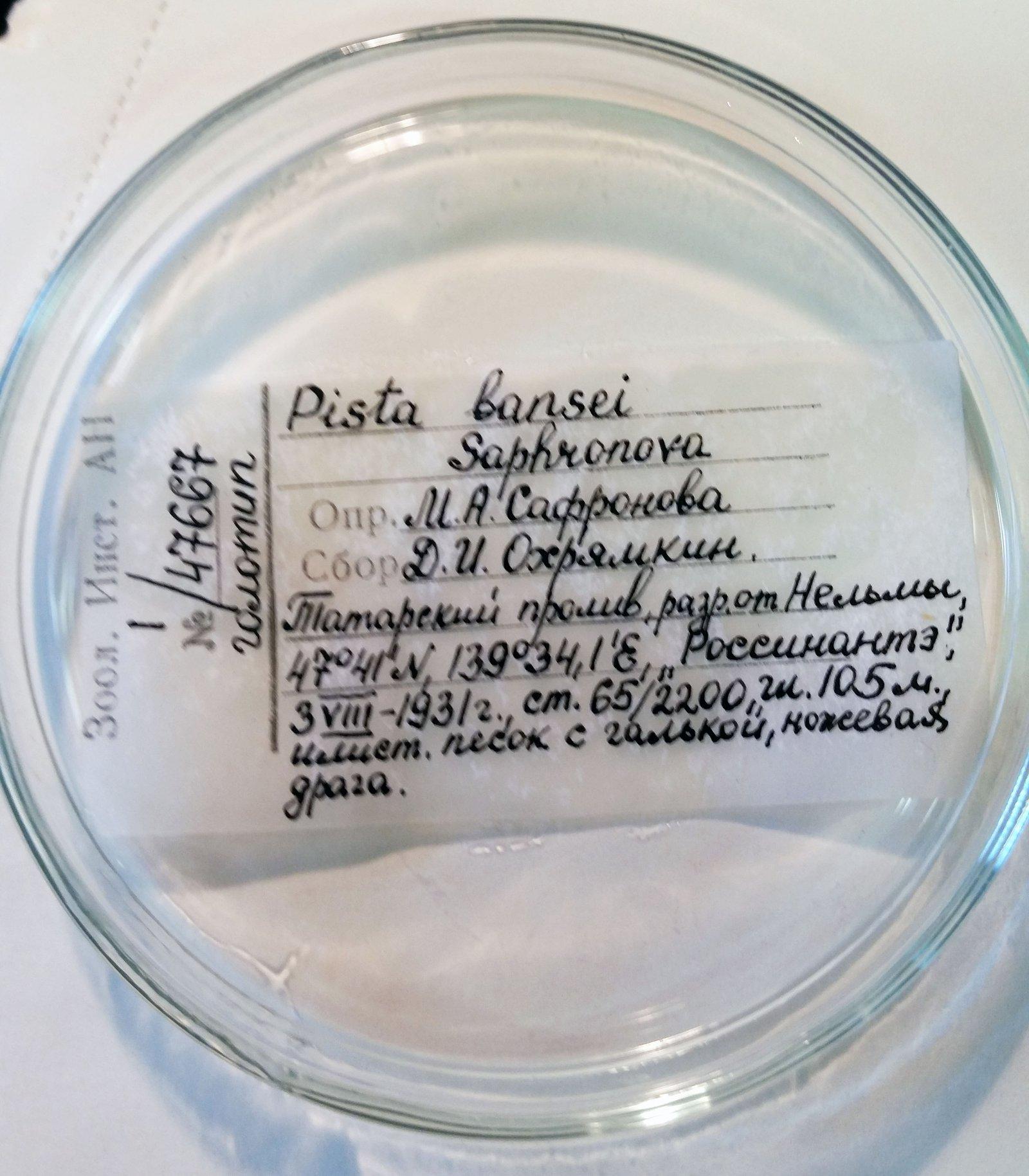 2018 Marine Invertebrates trip to Russia - Pat Hutchings and Elena Kupriyanova