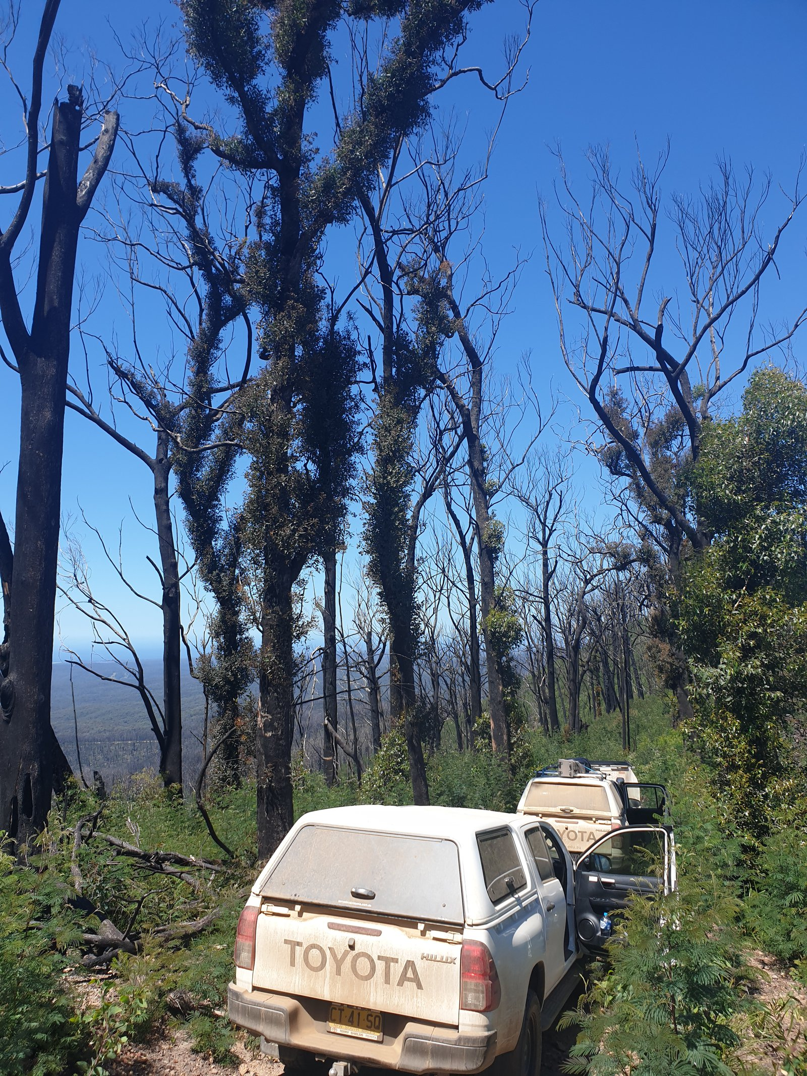 Surveying for land snails in severely burnt forests in southern NSW (inland from Bermagui)
