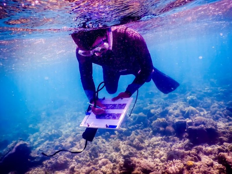 Kyle completing coral surveys on Loomis Reef, March 2021.