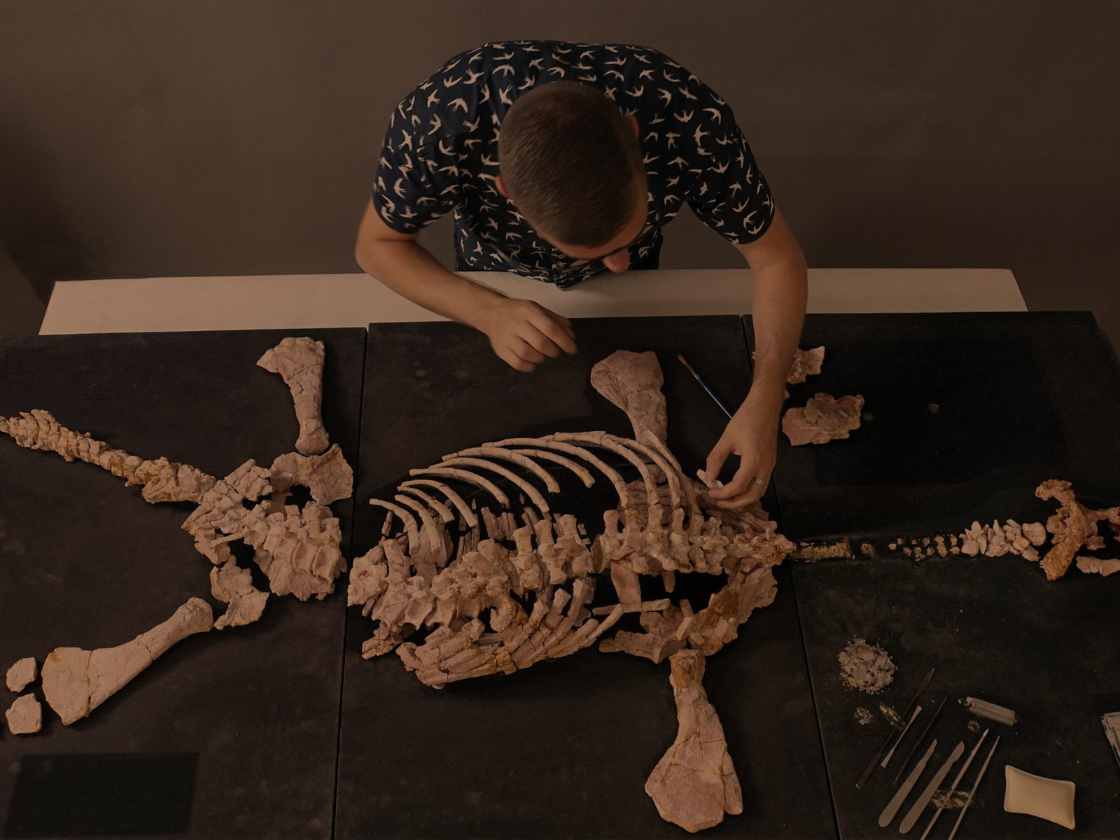 Scientist repairing a pliosaur skeleton