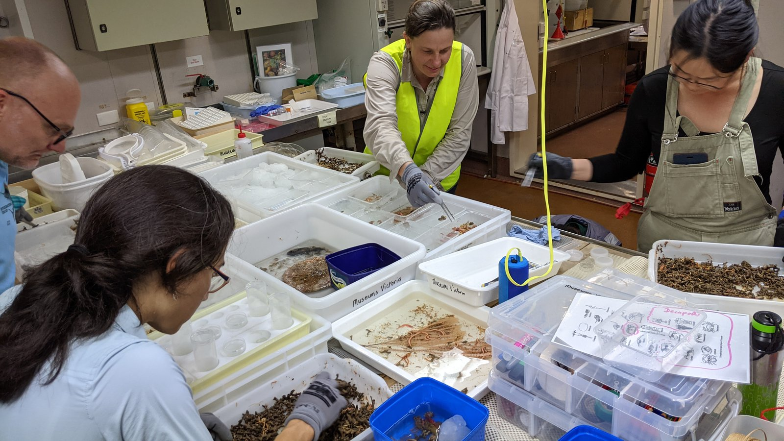 The frantic moments after the catch comes up: the sorting into different animal groups begins. Left to right: Frank Koehler (AM), Ana Hara (WAM), Kate Grarock (BushBlitz), and Alice Chen Yan (AM).