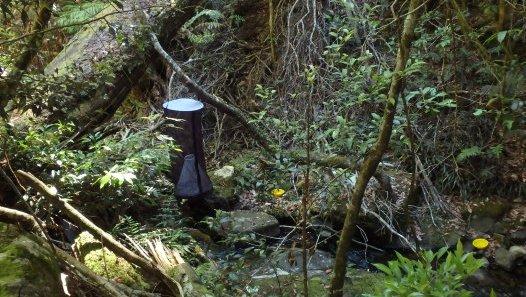'Fly traps', Plateau Beech, Werrikimbe National Park