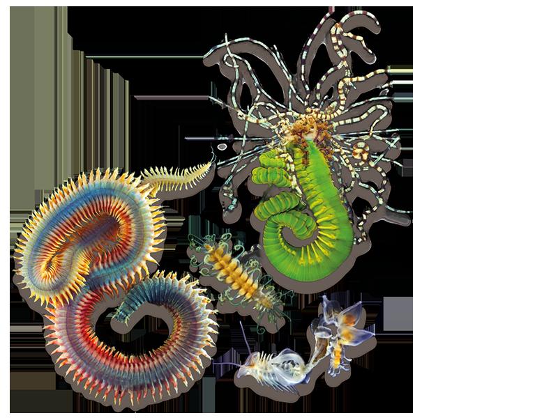 Homapage sea worms banner closure image
