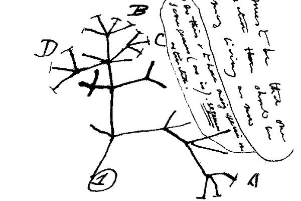 Charles Darwin's first diagram of an evolutionary tree
