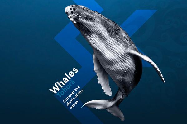 Whales | Tohorā promotional banner