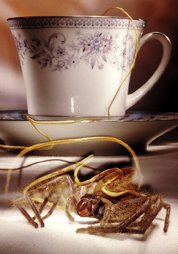 Huntsman spider and its worm parasite