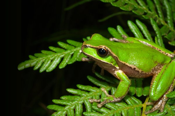 Frog on a fern leave