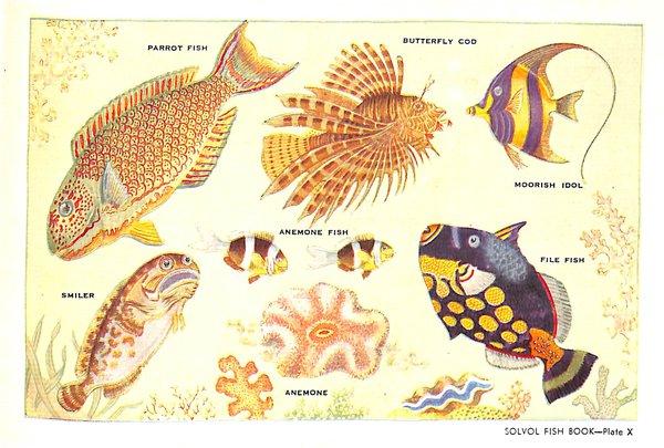 Solvol Fish Book - plate X AMS388/64