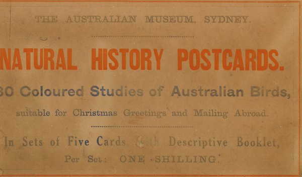 Australian Museum card, AMS492/C126