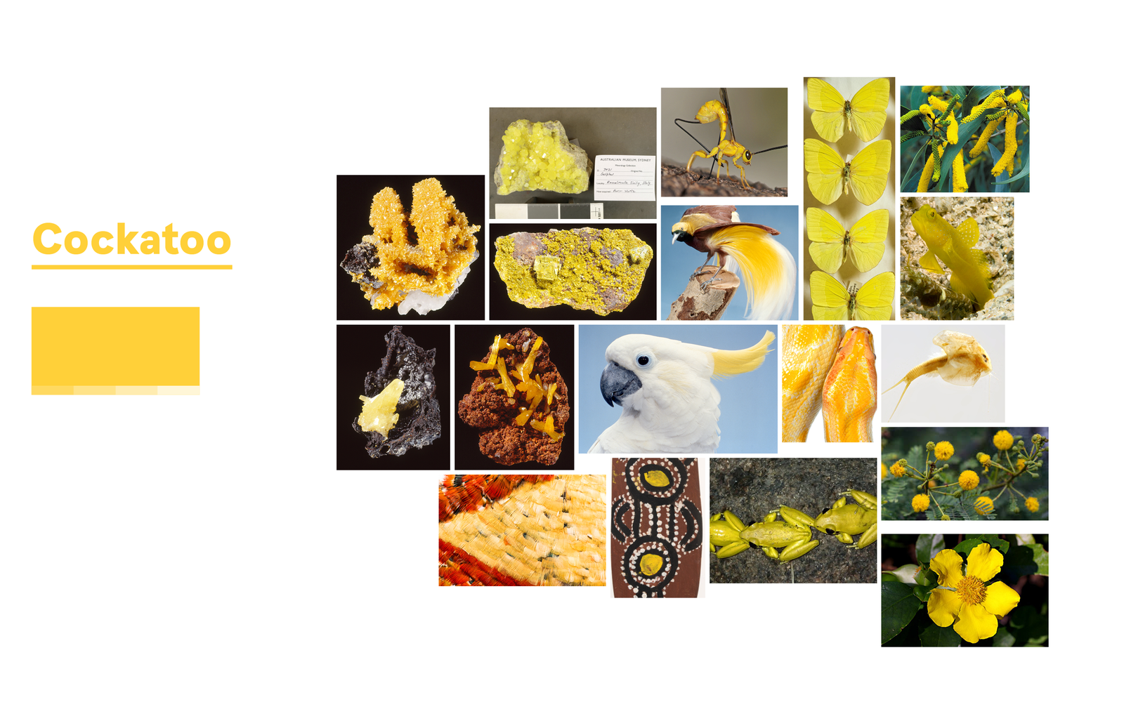 Inspiration for Cockatoo Yellow