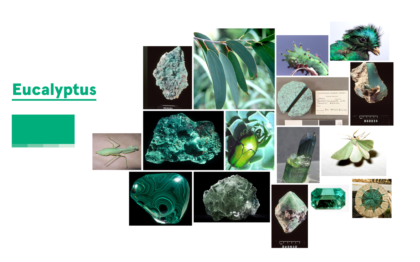 Inspiration for Eucalyptus Green
