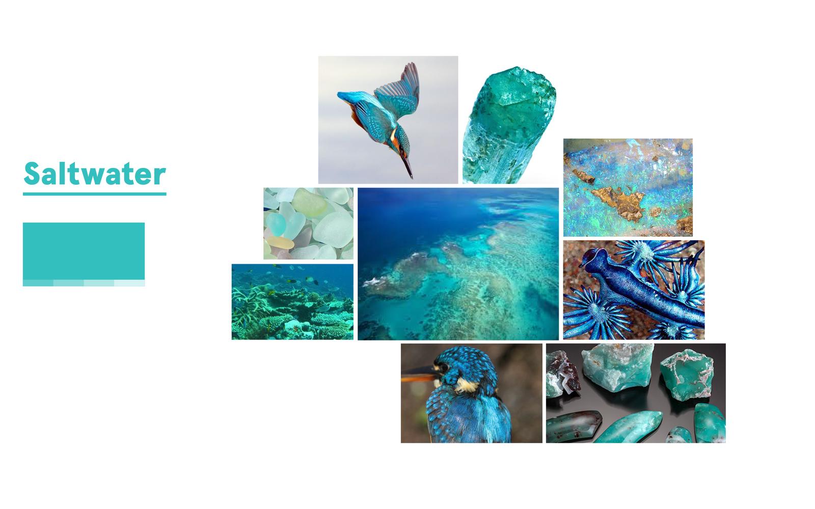 Inspiration for Saltwater Aqua