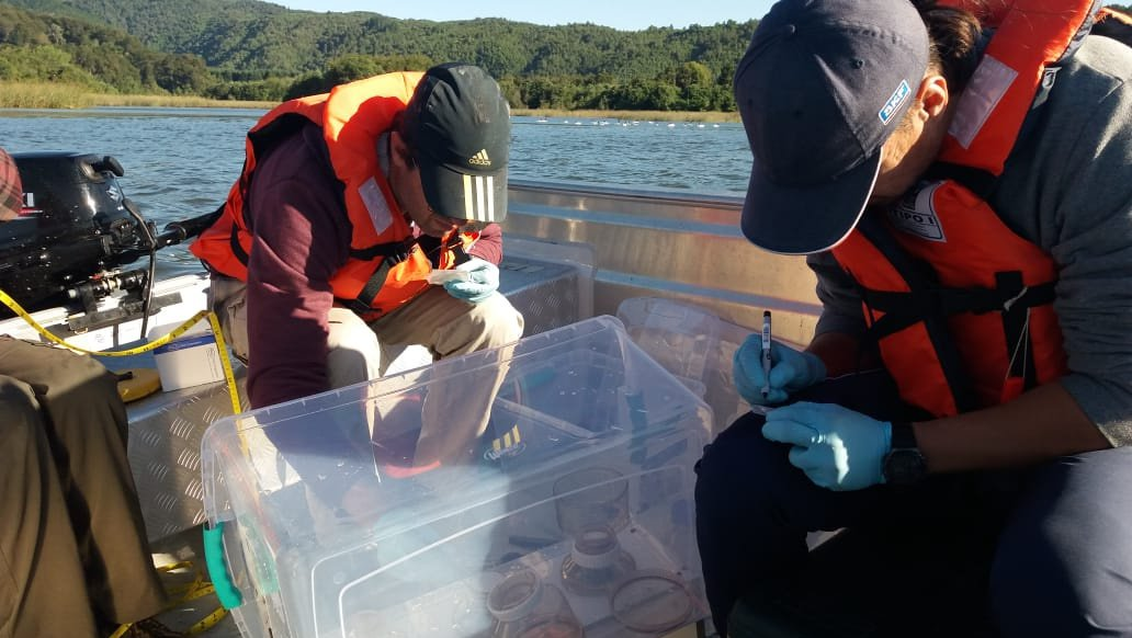 The environmental DNA team funded by CEHUM filters river water in Valdivia.