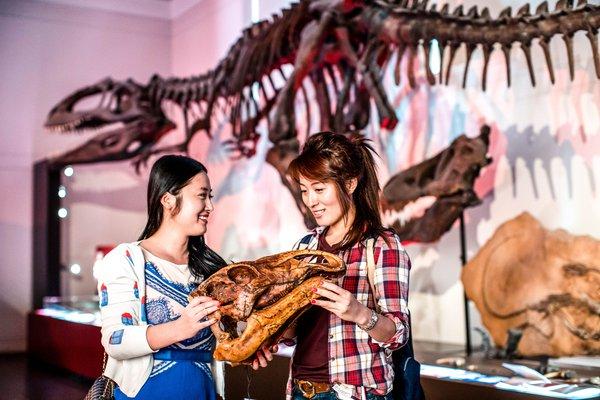 Handling specimens in Dinosaur gallery