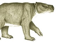 Australia's extinct animal: Alcoota Kolopsis, Kolopsis torus