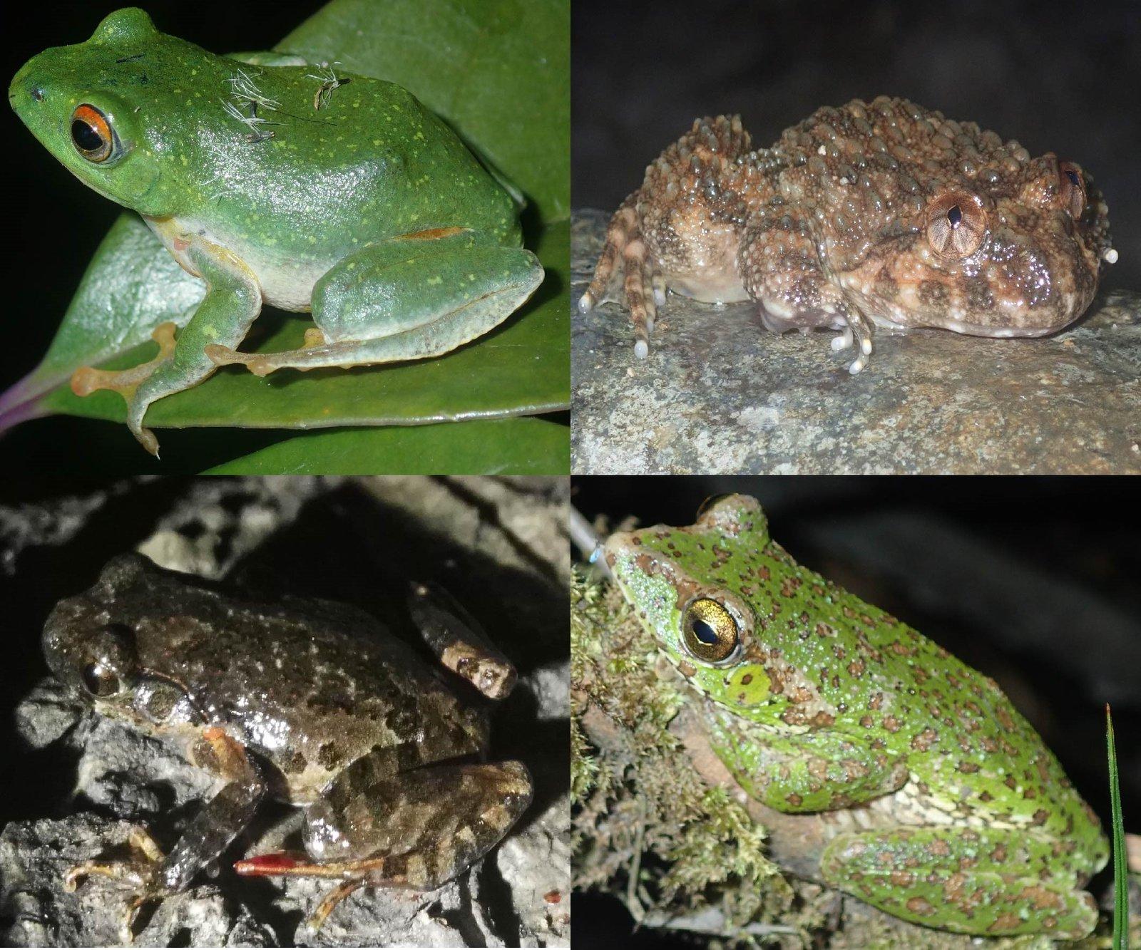 Amphibian diversity in the Hoang Lien Range, northern Vietnam.