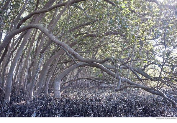 Ash Island NSW