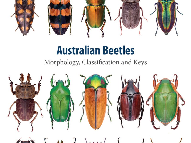 Australian Beetles (Volume 1)
