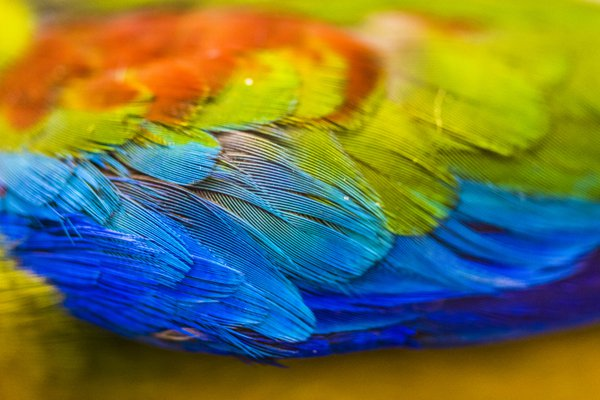 Australian Bird Feather Texture