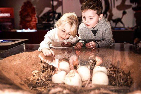 Kids explore dinosaur hatchlings