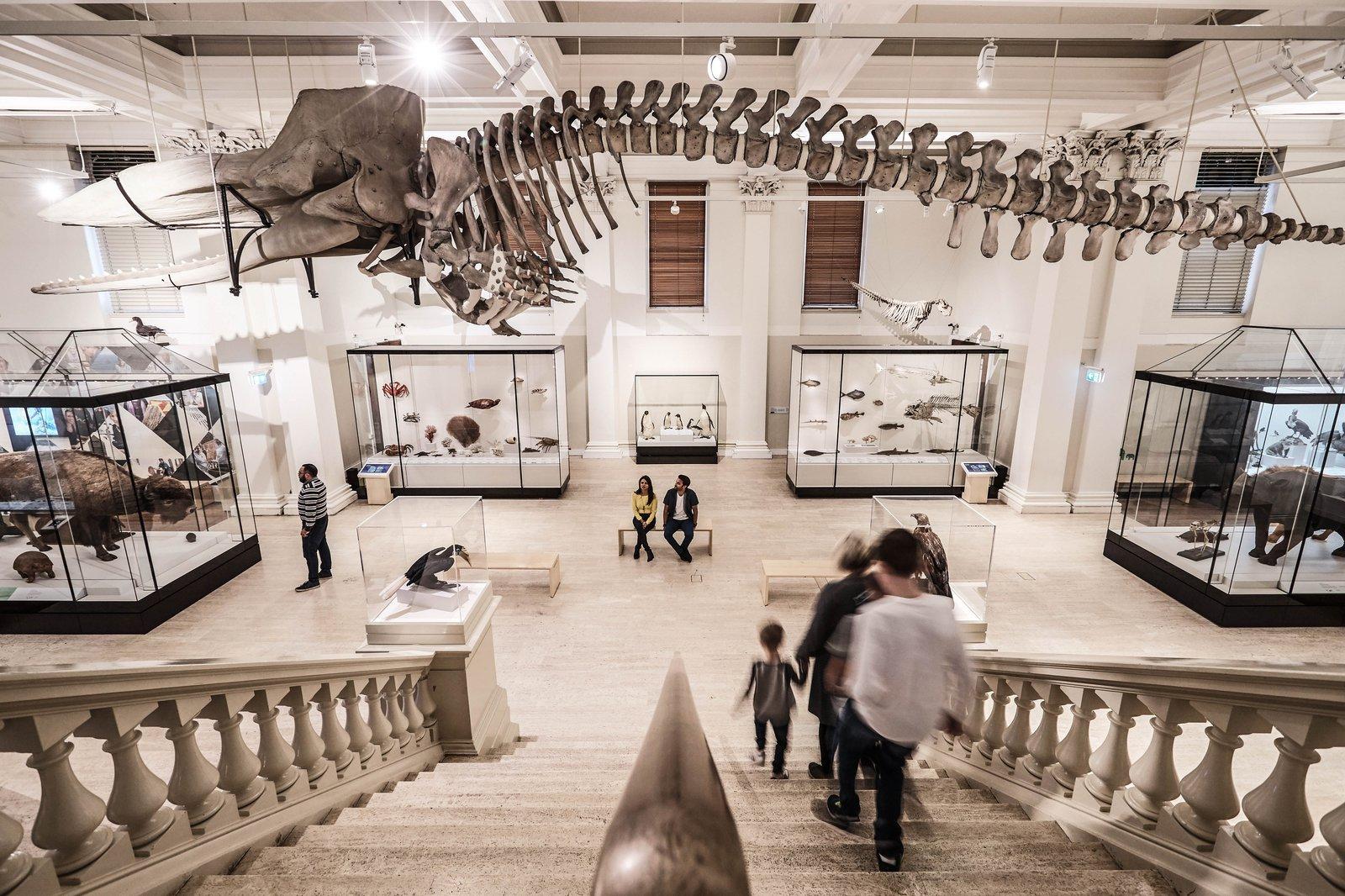 Wild Planet exhibition