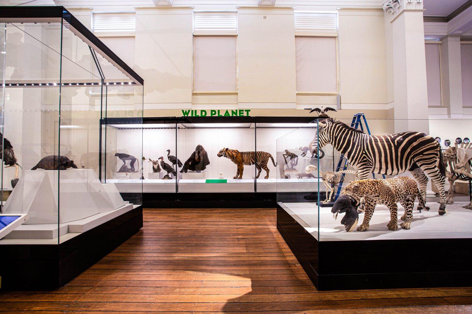 Wild Planet gallery