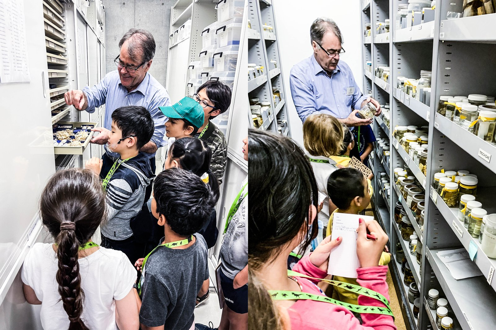 Behind-the-scenes of Malacology Collection