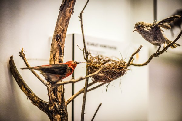 Birds of Australia Gallery 2018