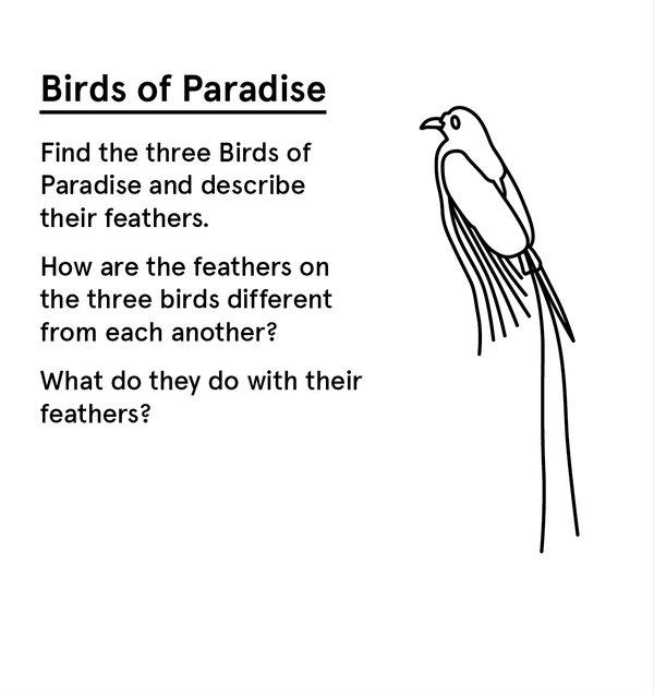 ED_WP_P - Birds of Paradise