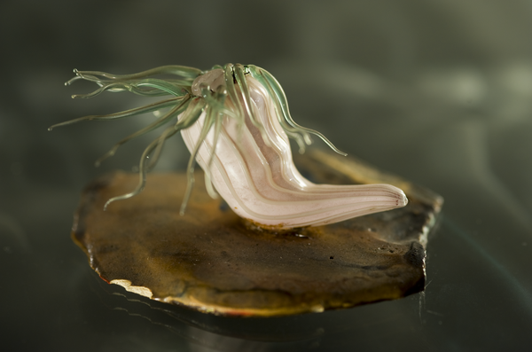Blaschka Glass Marine Life Models